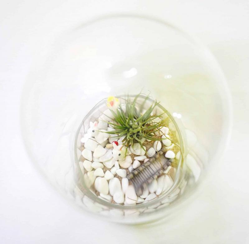 Assorted Terrarium Series Glass Bottle Terrarium Assorted Series - TAS 02 October 2021