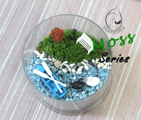 moss terrarium Exclusive Moss Series - EMS01 October 2021