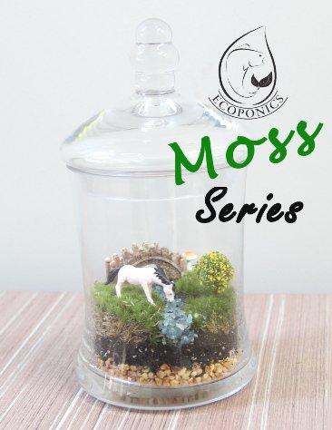 moss terrarium Exclusive Moss Series - EMS 02 October 2021