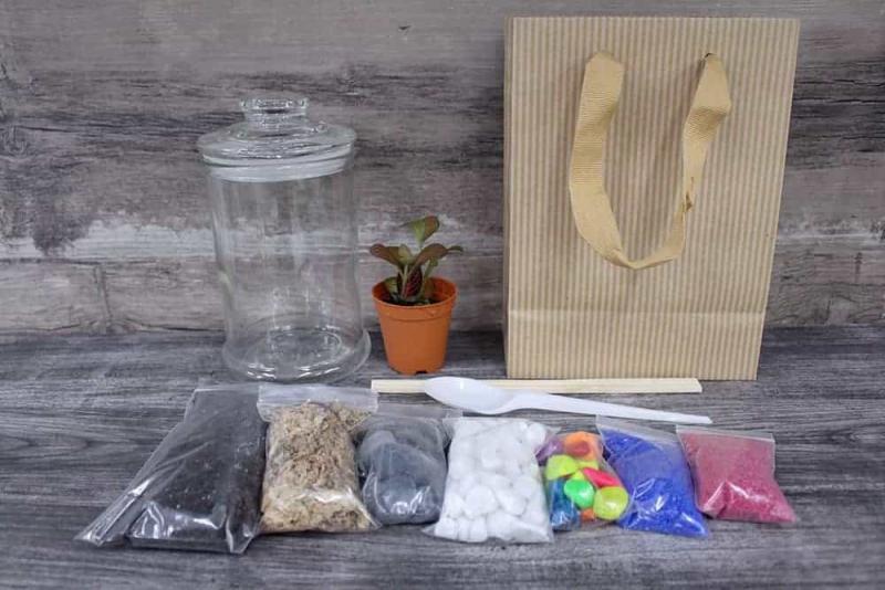Terrarium diy kit singapore Premium Terrarium DIY Kit October 2021