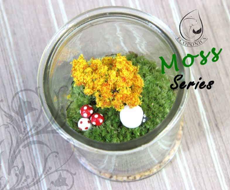 moss terrarium singapore Moss Series - MS01 October 2021