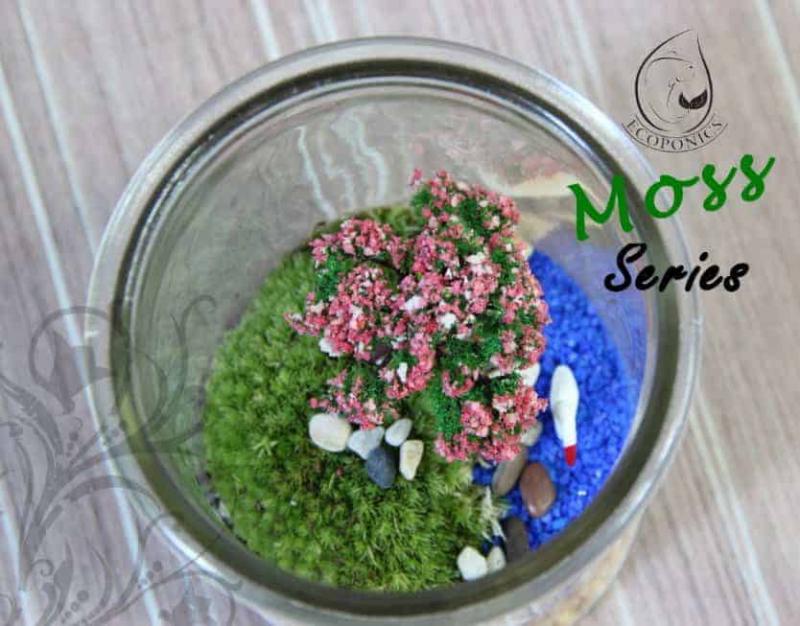 moss terrarium Moss Series - MS02 October 2021