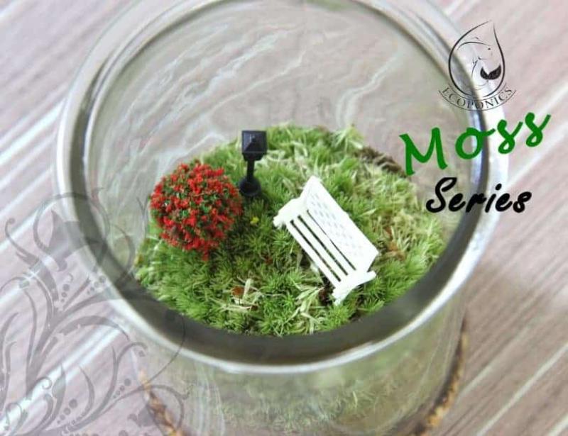 moss terrarium Moss Series - MS03 October 2021