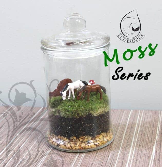 moss terrarium Moss Series - MS04 October 2021