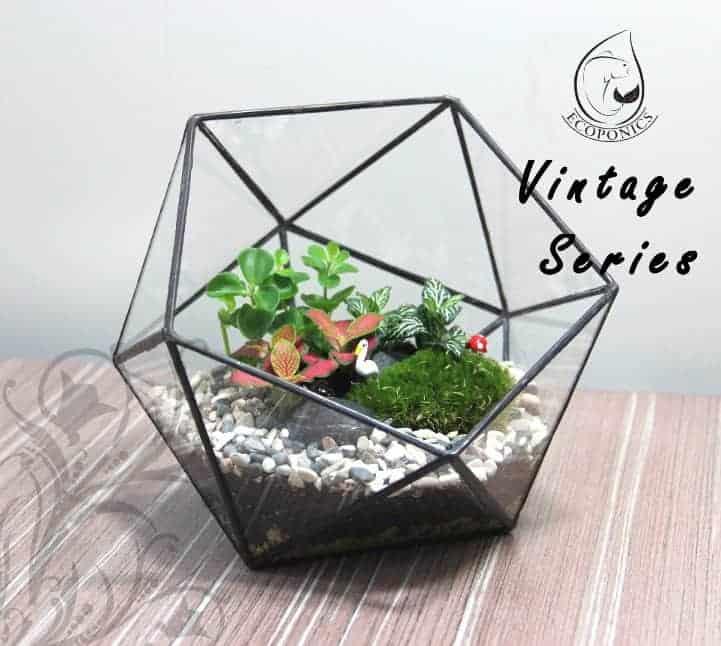 Terrarium Vintage Series Glass Bottle Vintage Series - VS 04 October 2021