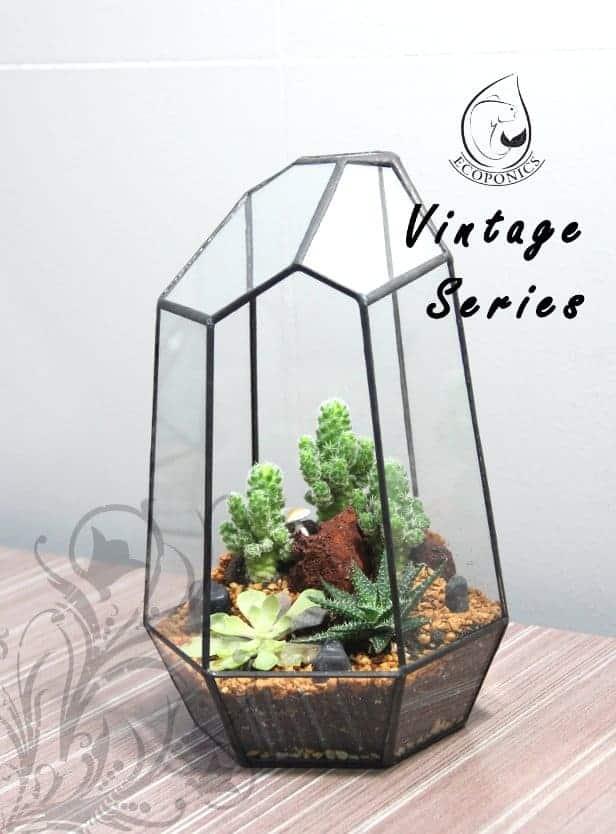 terrarium Vintage Series - VS 05 October 2021