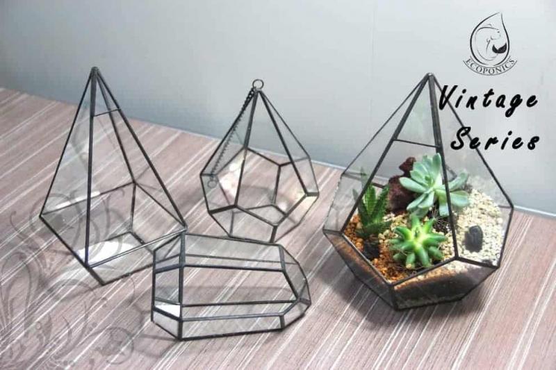 terrarium Vintage Series - VS 06 October 2021