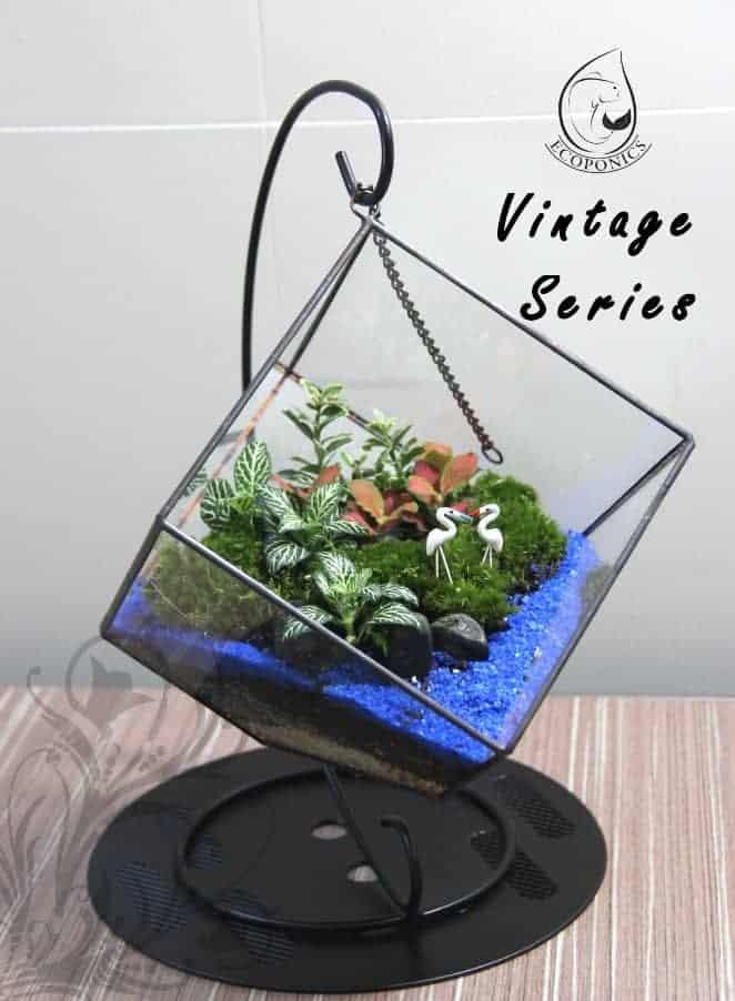 terrarium Vintage Series - VS 07 October 2021