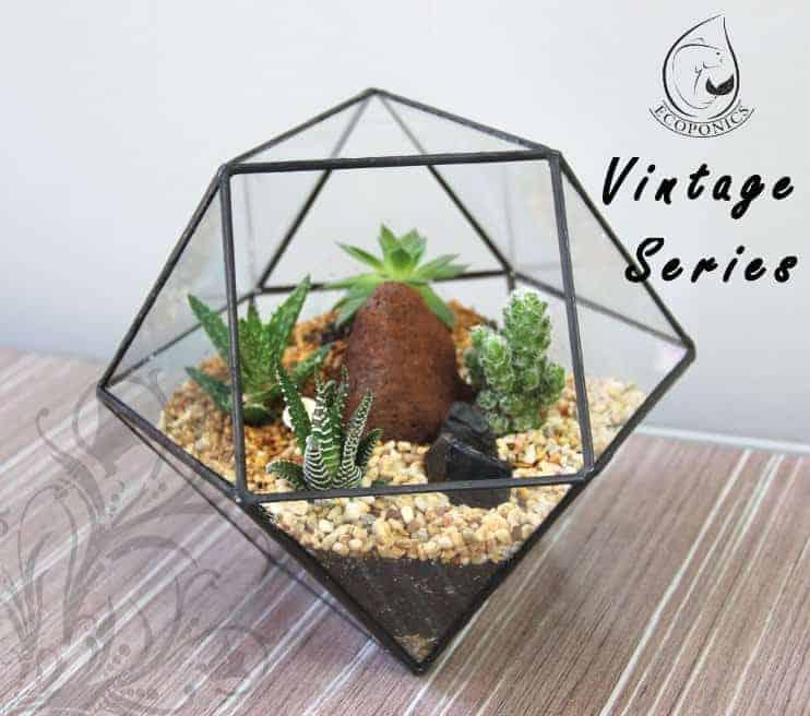 terrarium Vintage Series - VS 01 October 2021