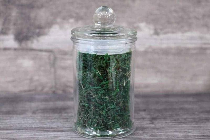 Terrarium supplies Singapore Decorative Green Moss October 2021